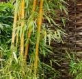 bamboo_2