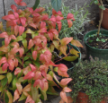 Choix des plantes