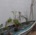 Mise en place des plantes sur la bache