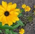 fleur_jaune_800x600