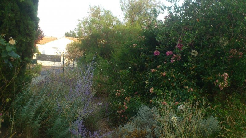 Am nagement ext rieur jardin jardicoach44 for Entretien jardin vertou