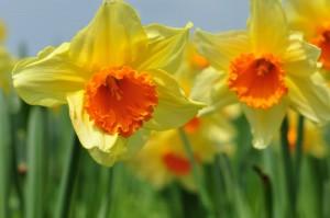Le printemps est là, contactez votre jardi coach pour conseil