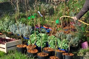 Préparation plantes